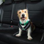 perro-lomito-auto.jpg