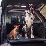 perros-auto.jpg